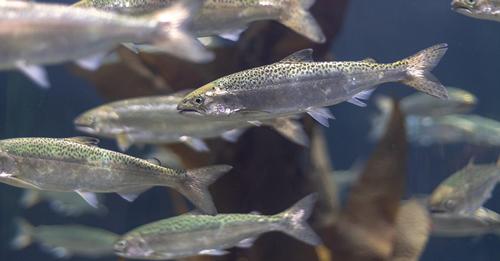 Salmon-cartel documents shouldn't go to US plaintiffs, EU Commission tells US court