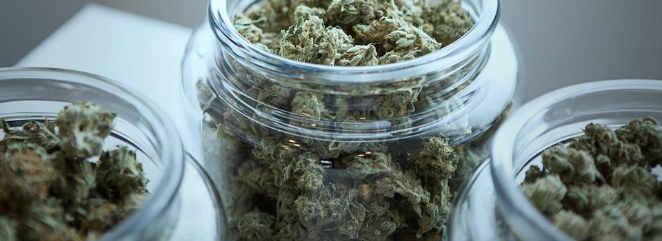 Curaleaf plan to build biggest US cannabis company faces close DOJ antitrust scrutiny