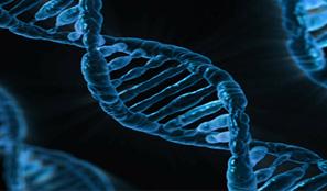 Illumina-PacBio probe DNA Polaroid